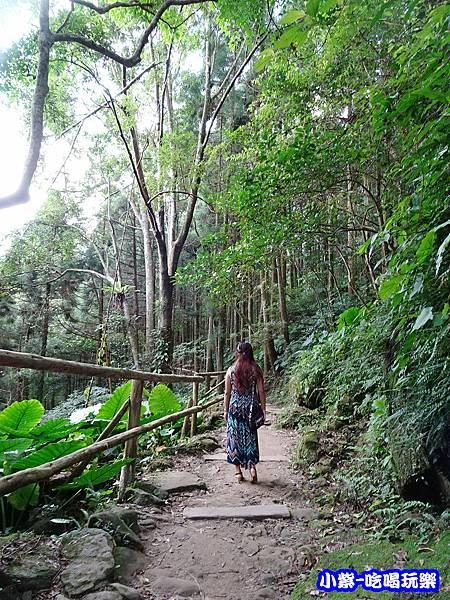 馬武督-綠光森林15.jpg