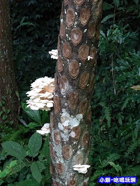 馬武督-綠光森林18.jpg