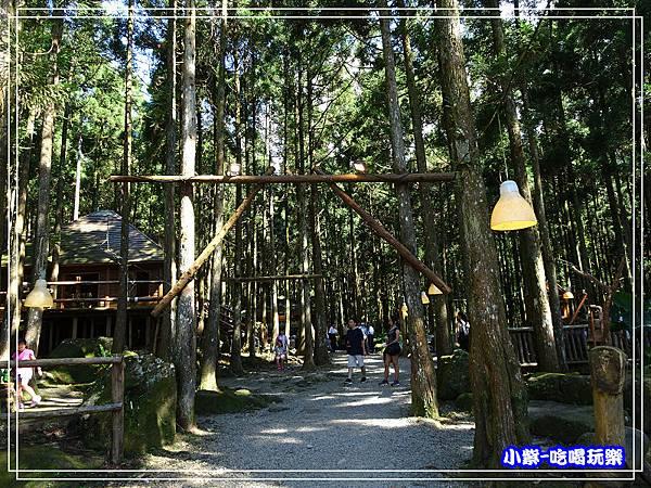 新竹-馬武督綠光森林 (15).jpg