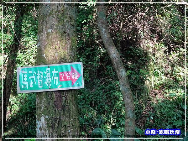新竹-馬武督綠光森林 (33).jpg