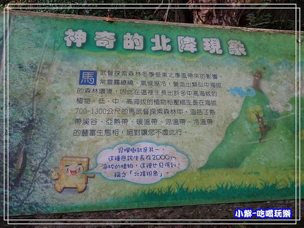 新竹-馬武督綠光森林 (34).jpg