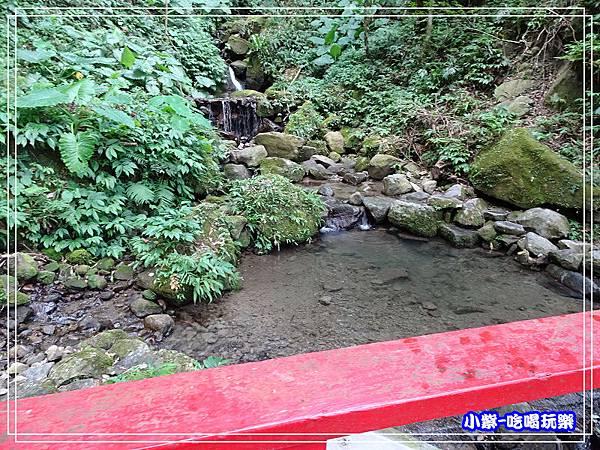 新竹-馬武督綠光森林 (39).jpg
