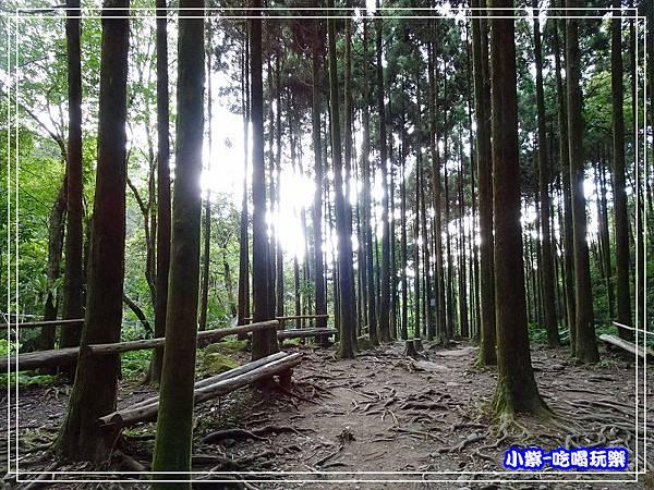 新竹-馬武督綠光森林 (41).jpg