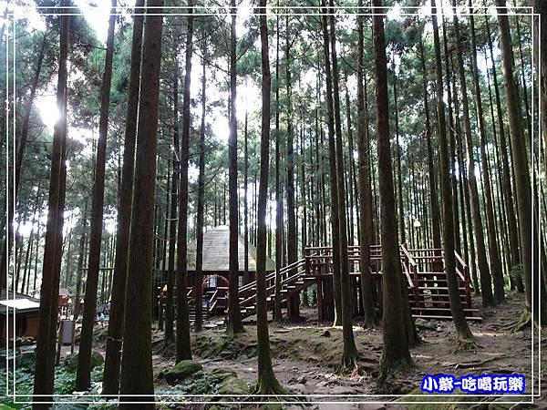 新竹-馬武督綠光森林 (42).jpg