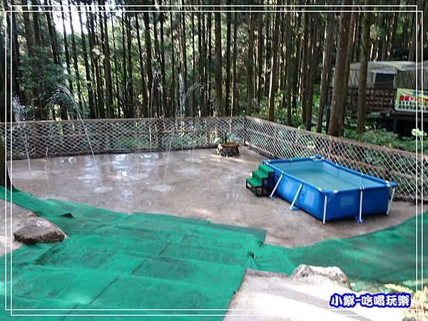 新竹-馬武督綠光森林 (44).jpg