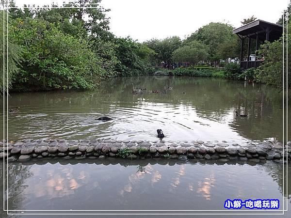 八德坡塘生態公園18.jpg