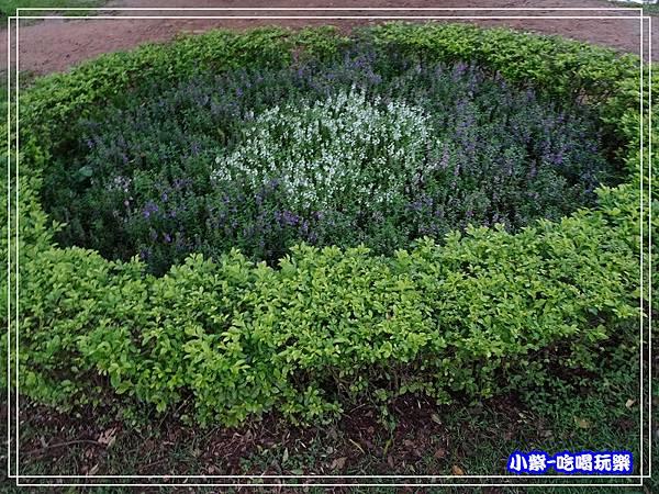 八德坡塘生態公園23.jpg