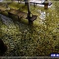 蘇澳冷泉-體驗池 (1)21.jpg