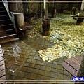 蘇澳冷泉-體驗池 (5)30.jpg