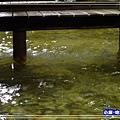 蘇澳冷泉-體驗池 (8)34.jpg