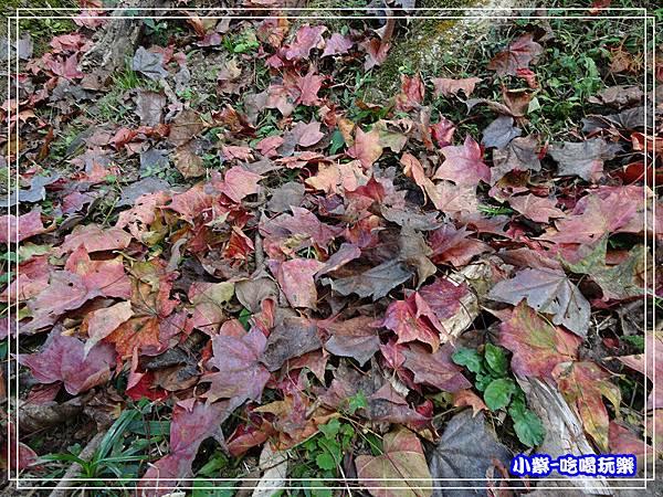溪州公園步道 (11)9.jpg