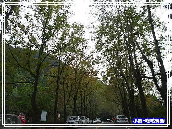 賞楓步道 (2)24.jpg
