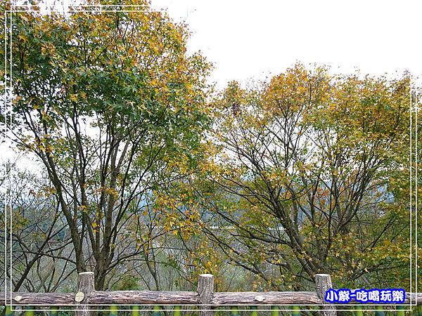 賞楓步道 (4)25.jpg