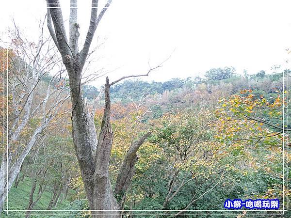 賞楓步道 (5)26.jpg
