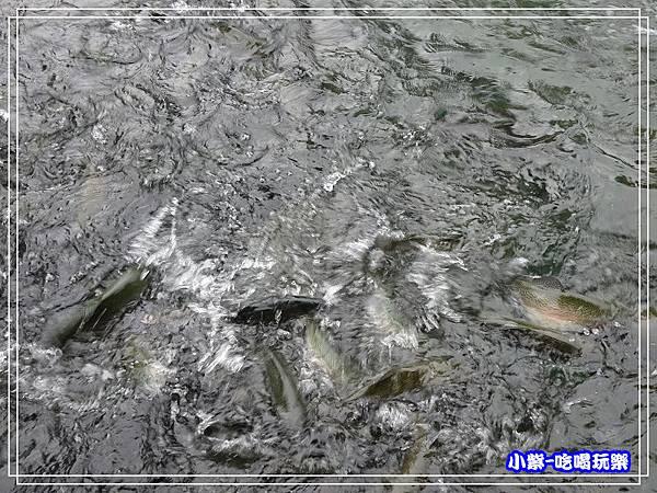 海陸鱒魚大餐 (2)11.jpg