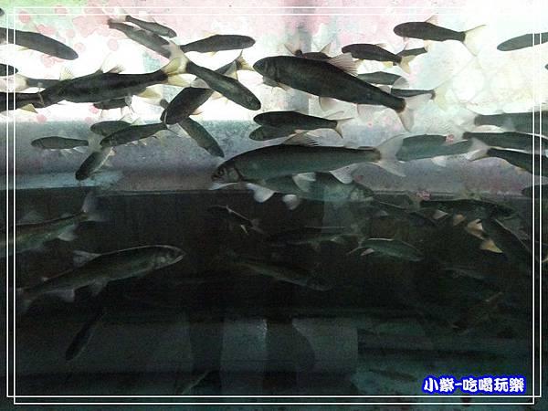 海陸鱒魚大餐 (16).jpg