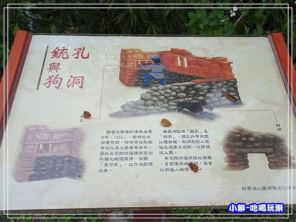 陳家松園落羽松12.jpg