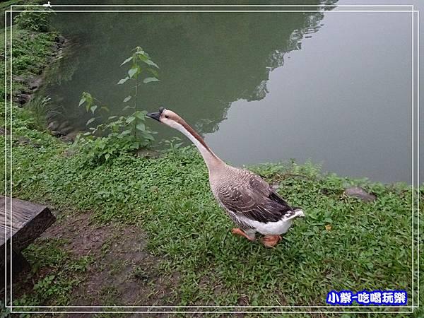 望龍埤 (21).jpg