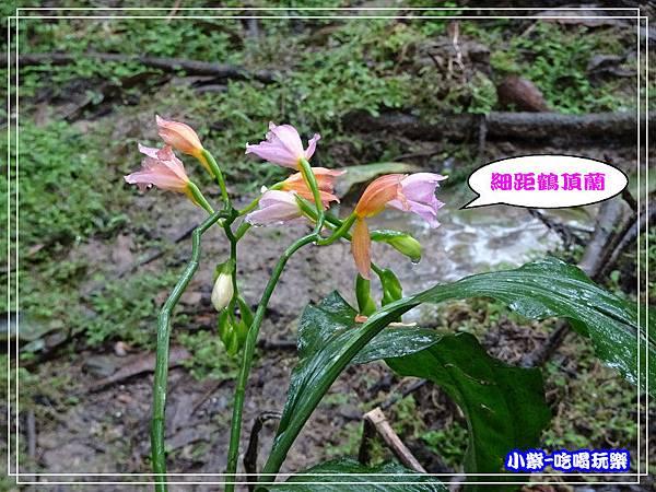 DSC0501224.jpg