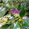 DSC0508156.jpg