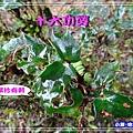 DSC0508357.jpg