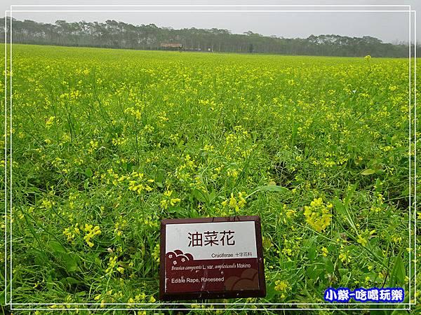 大農大富平地森林農場10.jpg