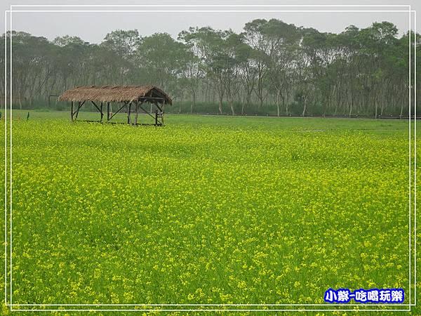 大農大富平地森林農場12.jpg