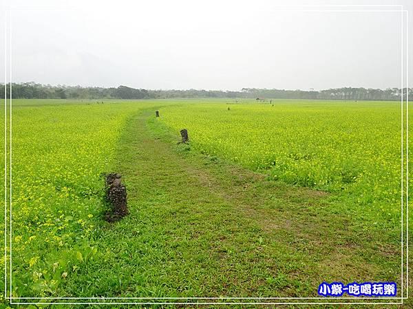 大農大富平地森林農場41.jpg