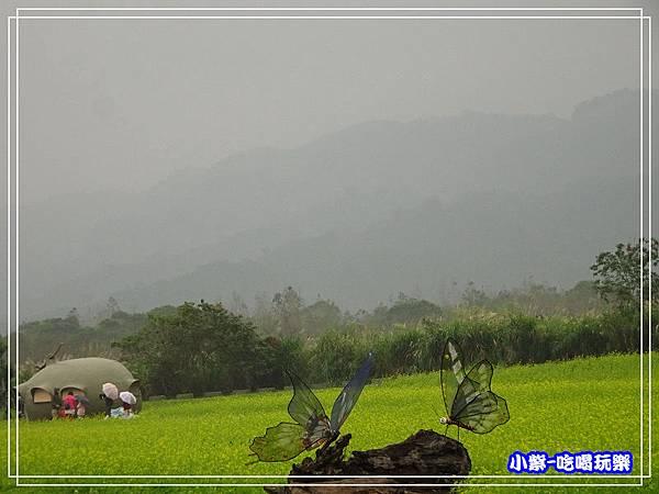 大農大富平地森林農場47.jpg