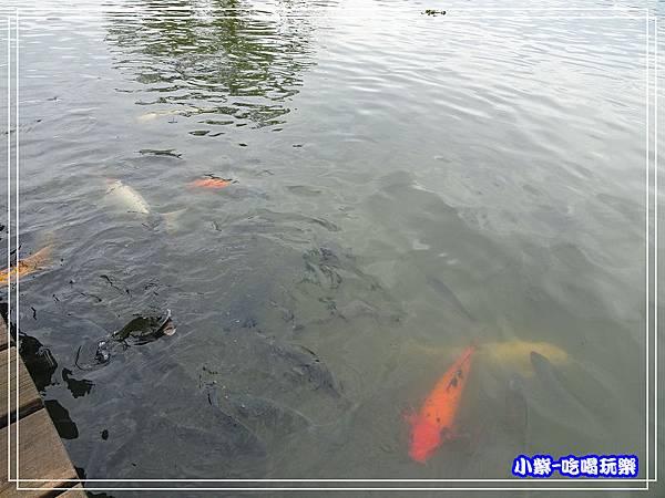羅東運動公園4.jpg