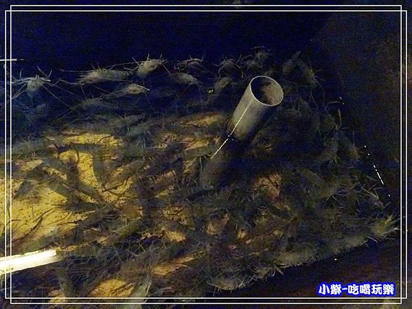 紅頭母蝦池 (1)45.jpg
