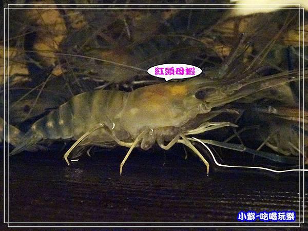 紅頭母蝦池 (3)46.jpg