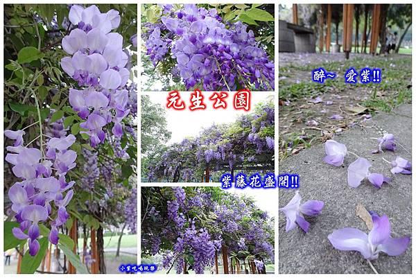 元生公園4月16日.jpg