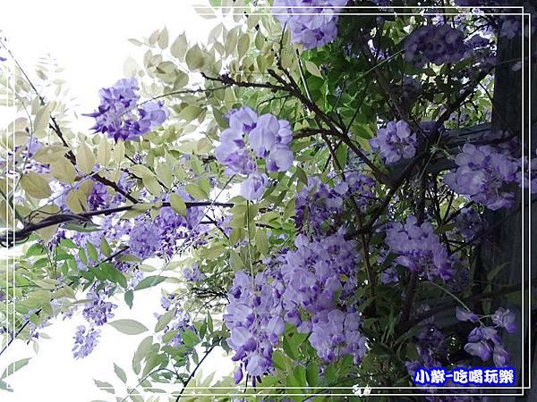 元生公園11.jpg