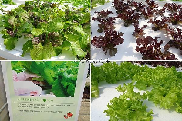 水耕蔬菜.jpg