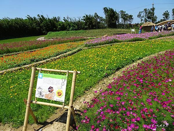 桃園農業博覽會25.jpg
