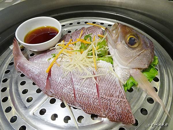 白肉梭魚 (3)27.jpg