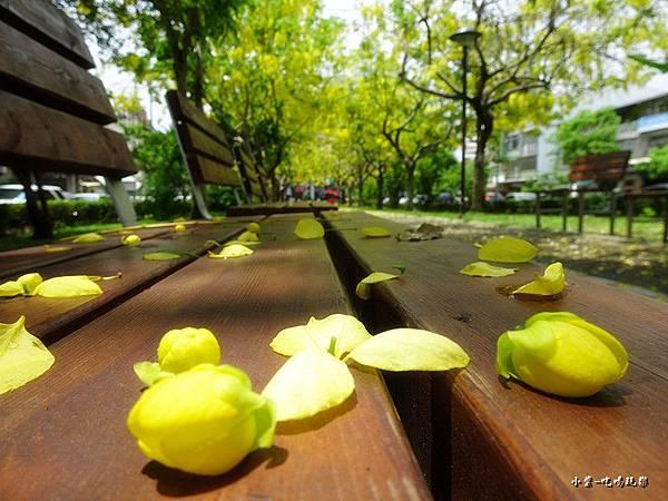 梅川東路一段-阿勃勒黃金雨4.jpg
