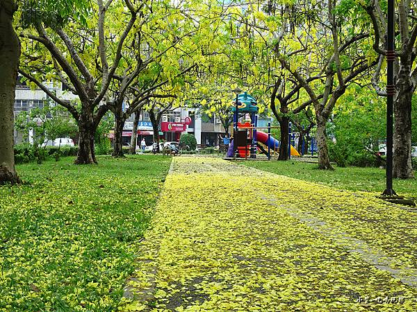 梅川東路一段-阿勃勒黃金雨9.jpg
