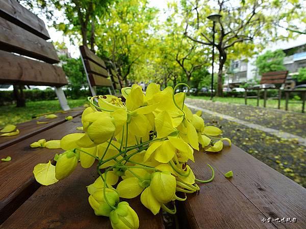 梅川東路一段-阿勃勒黃金雨11.jpg
