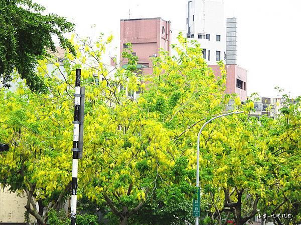 梅川東路一段-阿勃勒黃金雨12.jpg