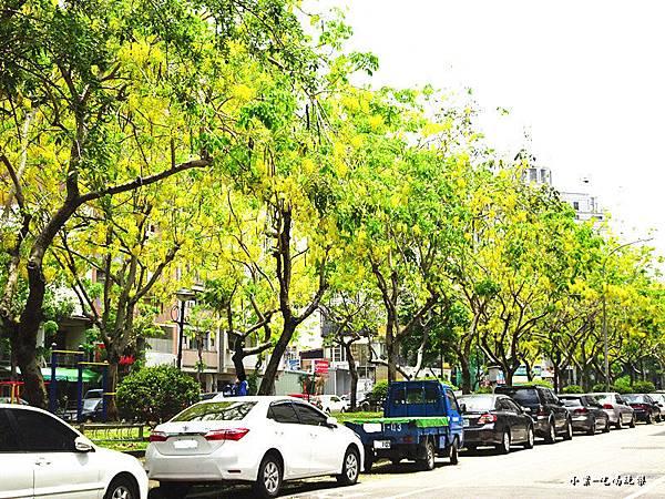 梅川東路一段-阿勃勒黃金雨14.jpg