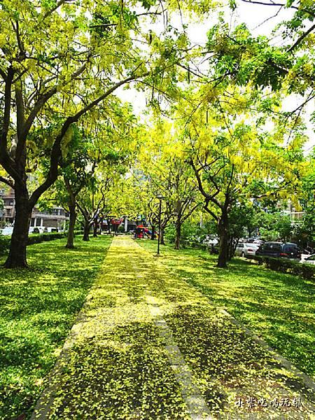 梅川東路一段-阿勃勒黃金雨16.jpg