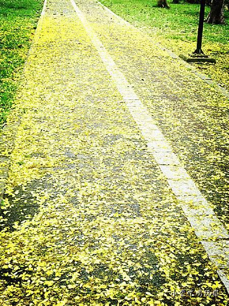 梅川東路一段-阿勃勒黃金雨19.jpg