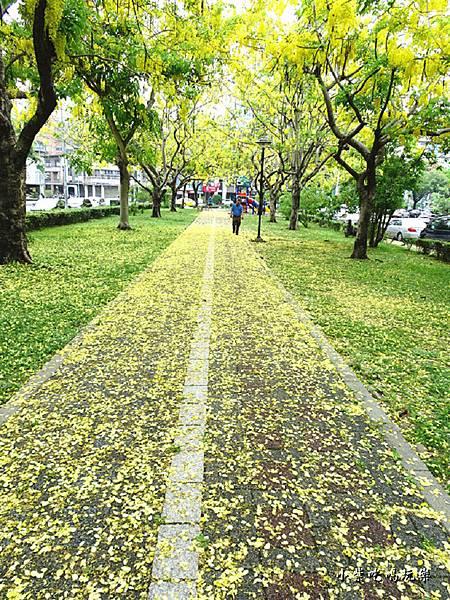 梅川東路一段-阿勃勒黃金雨21.jpg