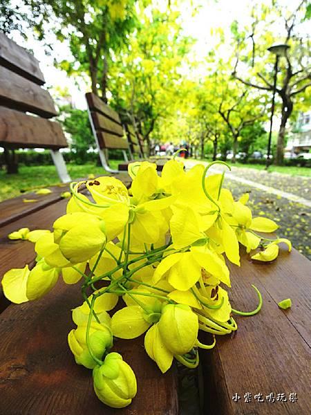梅川東路一段-阿勃勒黃金雨24.jpg
