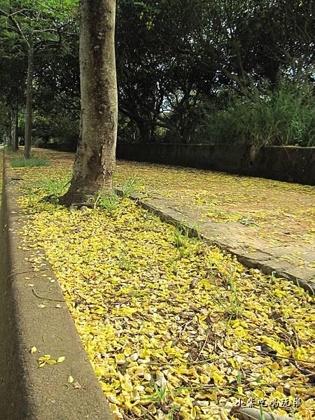 都會園路-黃金雨2.jpg