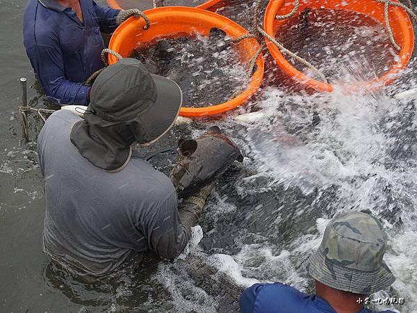 1抓取海水養殖0.jpg