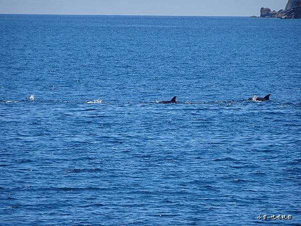 龜山島賞鯨2合18.jpg