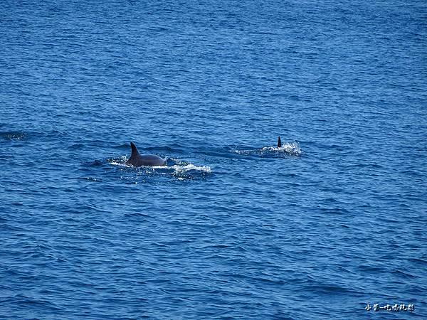 龜山島賞鯨2合110.jpg